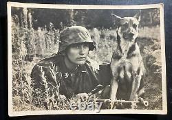Mint Germany Real Picture Postcard Cover Waffen SS Messenger And His Hound